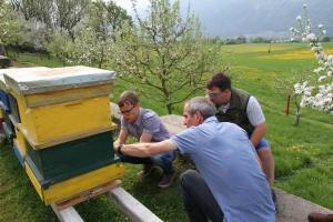 Beim Einbau der BeeSaver Messstation