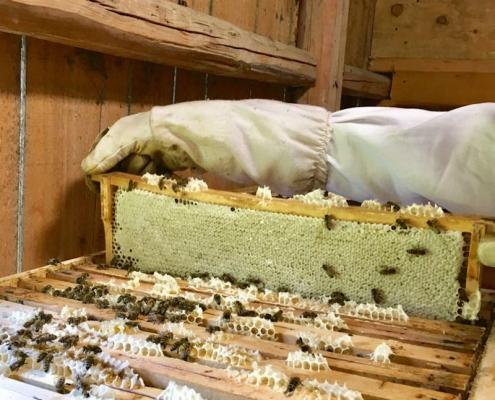 Erntereifer Honig