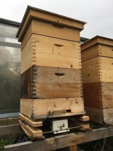 Bienenstock mit BeeSaver in St. Veit an der Glan