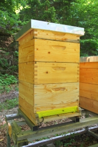 Der Bienenstock mit BeeSaver 2